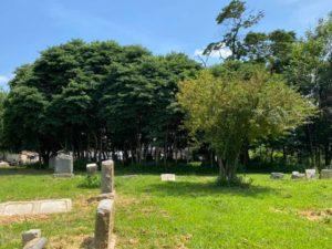 Trees in the arboretum
